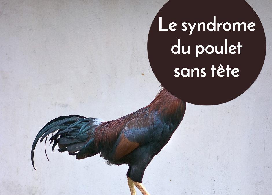 Le syndrome du poulet sans tête
